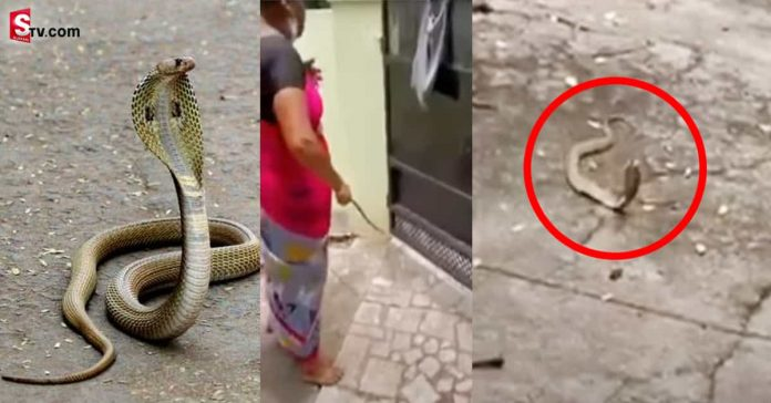 Cobra in the house The woman who was sent out to appease - Suman TV