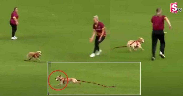 dog grabs ball and runs away